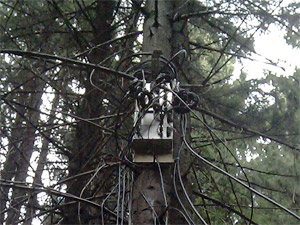 Загадки зеленоградского леса