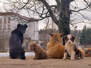 За неделю на улицах отловили сотню собак