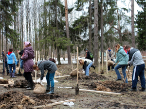 Сезон посадок деревьев с участием добровольцев откроется 12 апреля