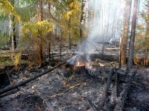 Управы создают лесные патрули