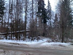 В Менделеево упавшее дерево придавило пенсионерку