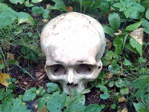 В лесу у Чашниково найдены человеческие останки