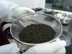 В промзоне Алабушево хотят заняться добычей черной икры