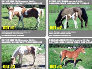 Близ Зеленограда устроят благотворительную распродажу жеребят и поросят