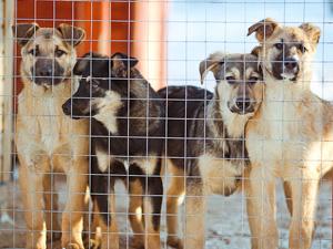 Защитники бездомных животных проведут пикеты в Крюково