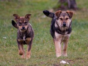 Собачьи площадки проверят на наличие паразитов
