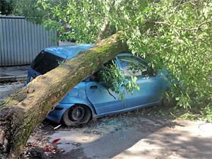 Дерево упало на автомобиль в 18-м микрорайоне
