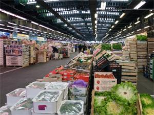 В Подмосковье появятся гигантские оптовые рынки