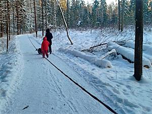 Оголенный провод в лесопарке
