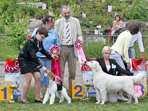 В конце мая на стадионе «Элион» пройдет выставка собак