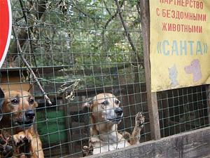 В Малино заживо сгорели четыре собаки