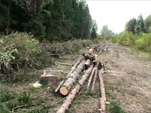 Деревья у платформы Малино вырубают для очистки ЛЭП