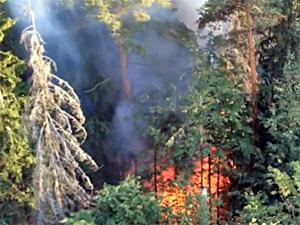 В Голубом потушен лесной пожар