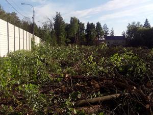 В Елино остановили незаконную рубку леса