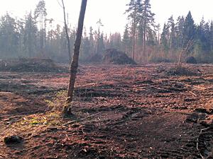 На борьбу с короедом в Зеленограде отвели еще 4 года