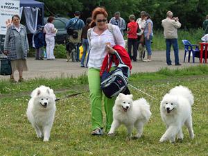 В выходные на стадионе «Элион» пройдет выставка собак