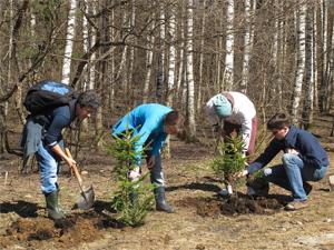 Посадки в лесах с участием жителей будут проходить каждую неделю
