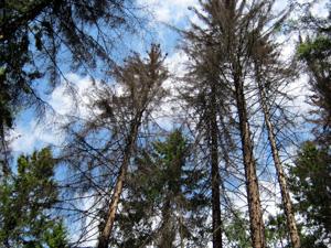 Зеленоградцев призвали к бдительности в лесопарках