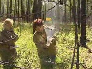 В лесах расставят ловушки для короедов