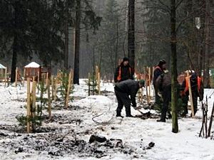 Почти 20 тысяч деревьев высадят в Зеленограде в 2013 году