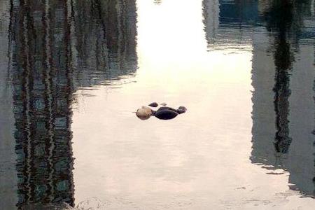 В Михайловском пруду нашли труп мужчины